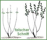 Strauch1_neu